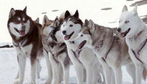 8-amici-da-salvare_cani-curiosity-movie
